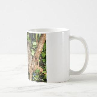 Climbing Koala jpg Mugs