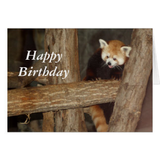 Climbing Panda Birthday Card