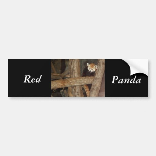Climbing Panda Bumper Sticker