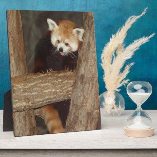 Climbing Panda Photo Plaque