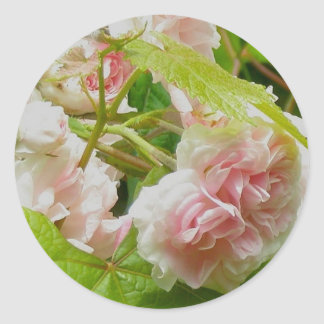 Climbing Pink Rose Stickers