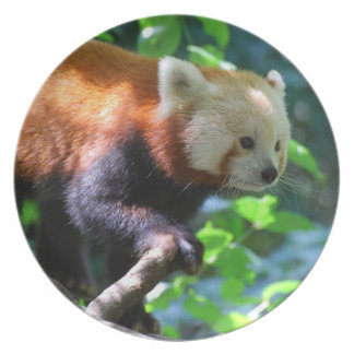 Climbing Red Panda Party Plate