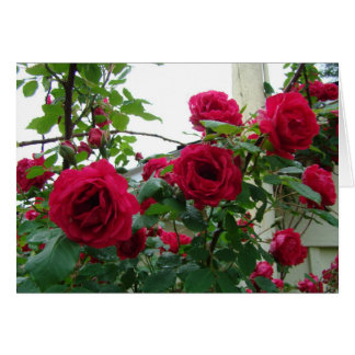 Climbing Red Roses Card