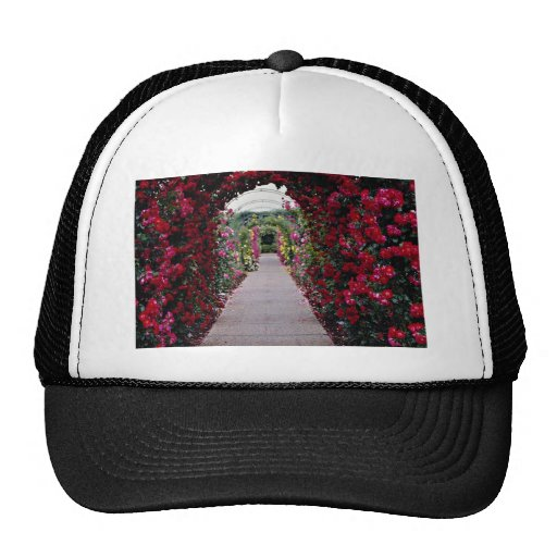 Climbing Rose Arches flowers Hats