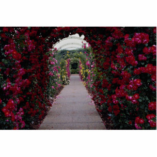 Climbing Rose Arches Roses Cutout