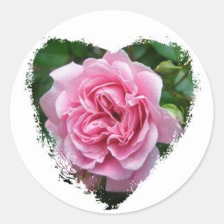 Climbing Rose Coordinating Items Classic Round Sticker