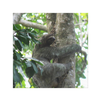 Climbing Sloth  Canvas Print