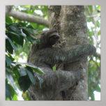 Climbing Sloth  Poster