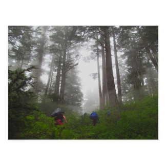 Climbing the Vertical Swamp Postcard