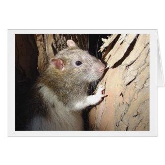 Climbing tree card