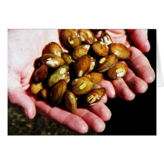 Clinch River Mussels in Hand Greeting Cards