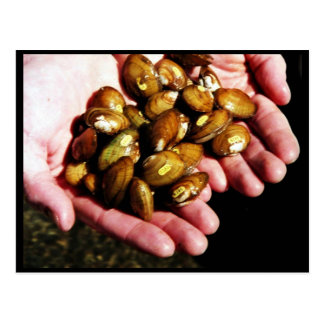 Clinch River Mussels in Hand Postcard
