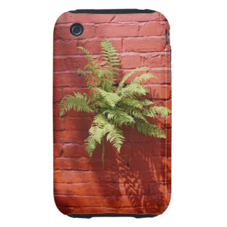 Clinging On Fern iPhone 3G/3GS Tough iPhone 3 Tough Case