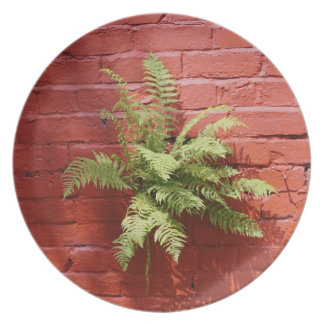 Clinging On Fern  Plate