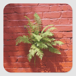 Clinging On Fern Square Sticker