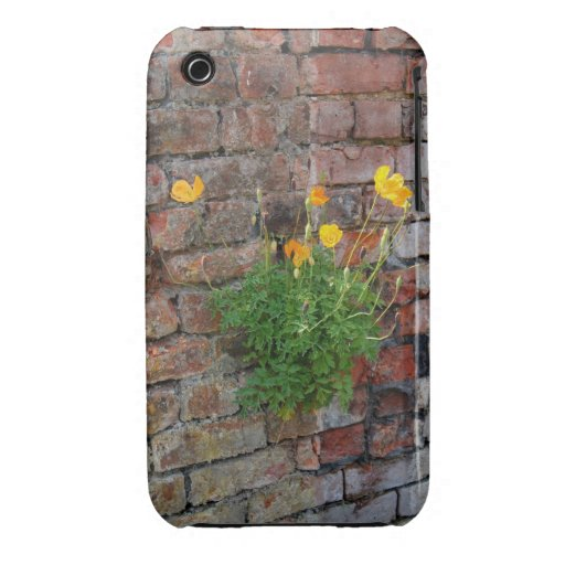 Clinging On Poppy 3/3GS Case-Mate iPhone 3 Cases
