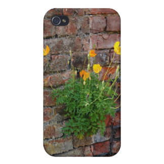 Clinging On Poppy 4/4S iPhone 4 Case