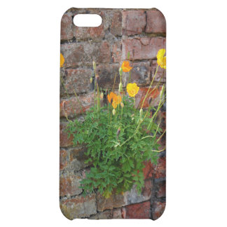 Clinging On Poppy 4/4S iPhone 5C Covers