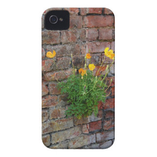 Clinging On Poppy Blackberry Bold Case Case-Mate iPhone 4 Cases