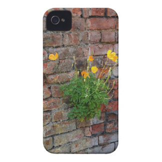 Clinging On Poppy iPhone 4/4S iPhone 4 Cover