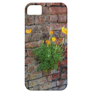 Clinging On Poppy iPhone 5 iPhone 5 Cases