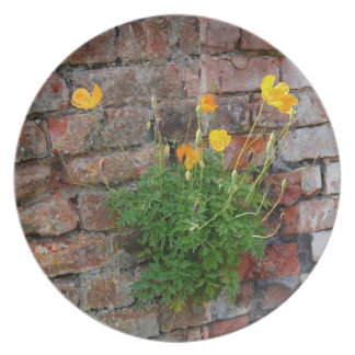 Clinging On Poppy Plate
