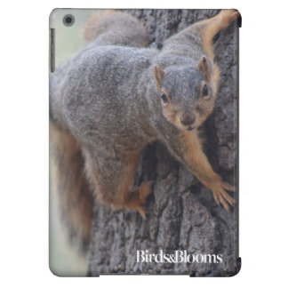 Clinging Squirrel Case For iPad Air