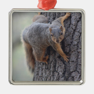 Clinging Squirrel Metal Ornament