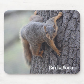 Clinging Squirrel Mouse Pad