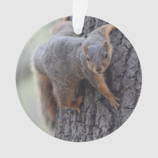 Clinging Squirrel Ornament