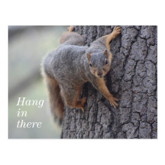 Clinging Squirrel Postcard