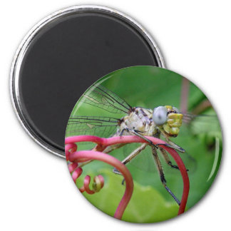 Clingy - dragonfly 2 inch round magnet