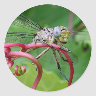 Clingy - dragonfly classic round sticker