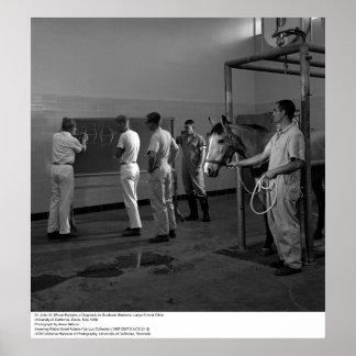 Clinic animal grande, Uc Davis, 1966 Posters