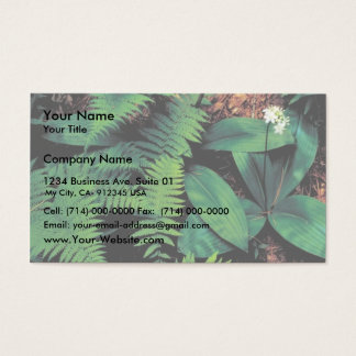 Clinton's lily business card