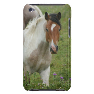 Clipped Paint Horse iTouch Case