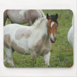 Clipped Paint Horse Mouse Pad