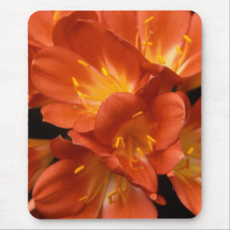Clivia Flower Cluster Mouse Pad