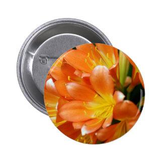Clivia Miniata Button
