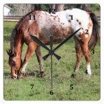 Clock, Appaloosa Horse
