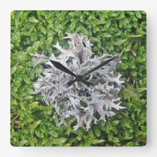 Clock bright lichen on green Moos