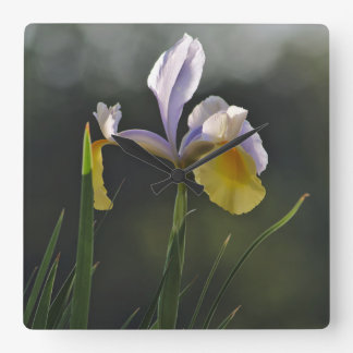 Clock: Garden Orchid Square Wallclock