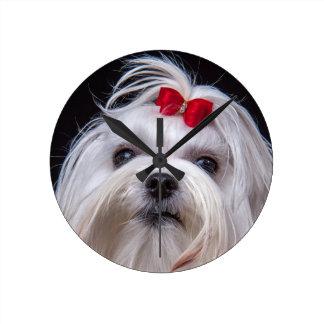 Clock maltese small white toy dog