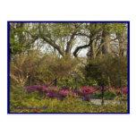 Cloisters Gardens #1 Postcard