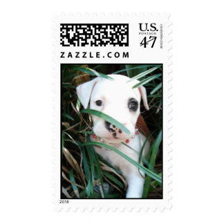 Cloris of Oak Forest-Beautiful Puppy Stamp
