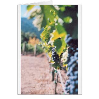 Clos Pegase Winery Greeting Cards