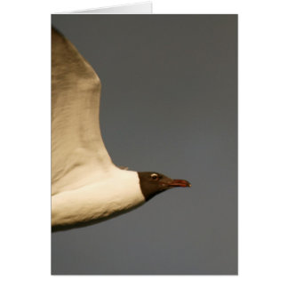 Close Encounter with Laughing Gull Card