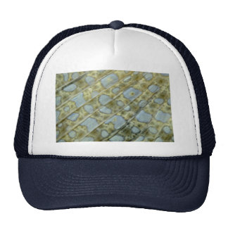 Close look at the caudal fin of a peacock flounder mesh hat