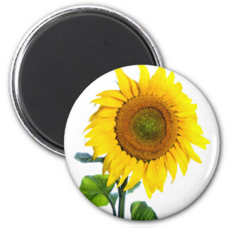 Close-Look Of Sunflower Plant 2 Inch Round Magnet