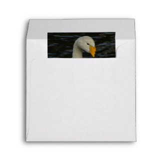 Close Portrait Of Thoughtful-Looking Whooper Swan Envelope